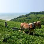 Innovative Land Management Harnesses Traditional Methods