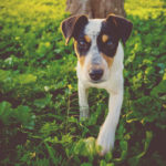 PET CORNER: Competition time! Calling all dog lovers