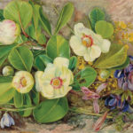 """""""I am a very wild bird  and like liberty""""  Marianne North 1820-1890"""