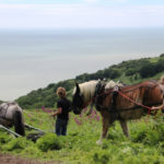 Heavy Horses Return to Bruising Bracken