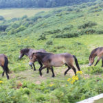 Hastings Country Park To Say Goodbye To Well-loved Ponies