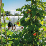 Opportunity to bloom for budding horticulturalists