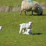 Cruel April on the Farm